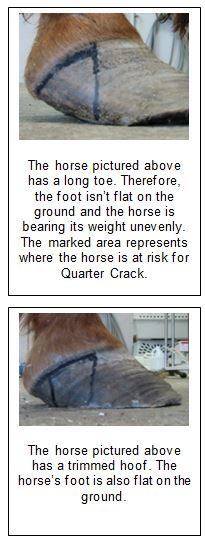 What causes a quarter crack in the horse's hoof? Find out.