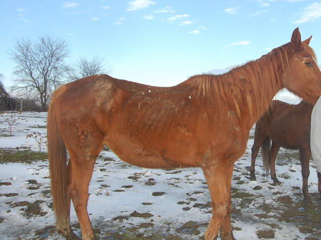 Rebecca Roberts, a Morgan Horse breeder in Pennsylvania is facing criminal charges.