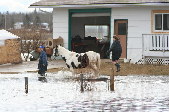 Flood waters mean other creatures will be trying to get to higher ground as well, including bugs. Be prepared for you and your horses.