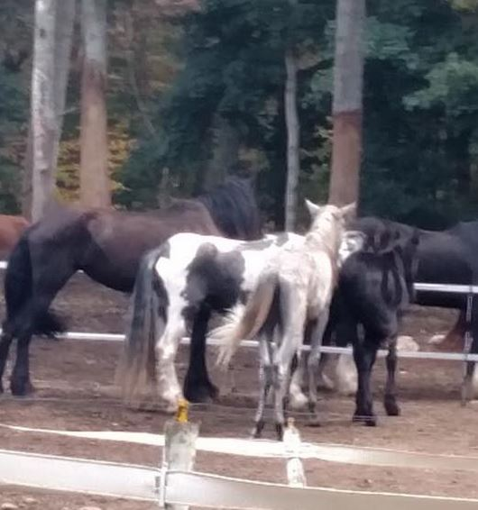 Fairy Tails Equines farm photo shows their horses ate the bark off trees as high as they could reach.
