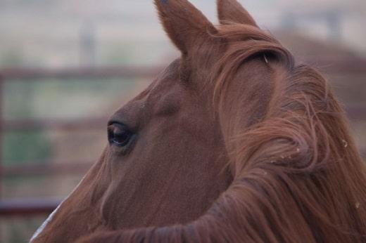 Horse euthanized