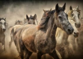 Leadership for Business Learned at the Stable - Horse Sense