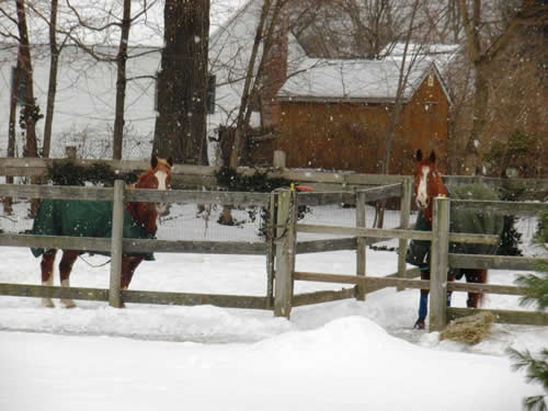 Getting Your Horse Winter Ready