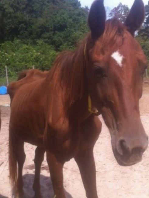 AQHA Breeder Investigated by Texas Authorities for Alleged Horse Neglect