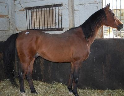 Horse Breeder Strikes Deal in Cruelty Case