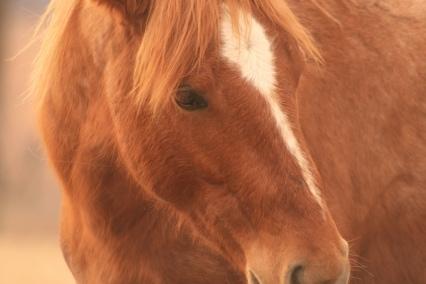 EHV-1 Confirmed in South Dakota Horse