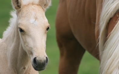 Deadly EIA Confirmed in 12 Nebraska Horses