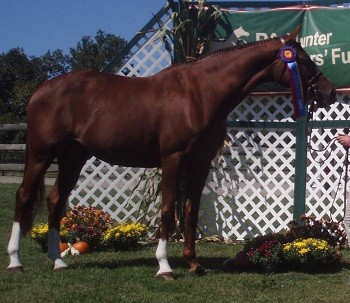 USEF Considers Reinstatement for Criminal Horse Trainers