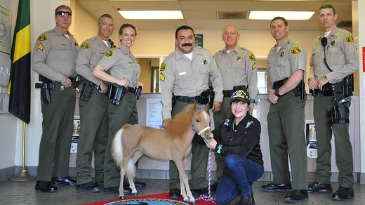 Miniature Therapy Horse Joins Sheriff's Department
