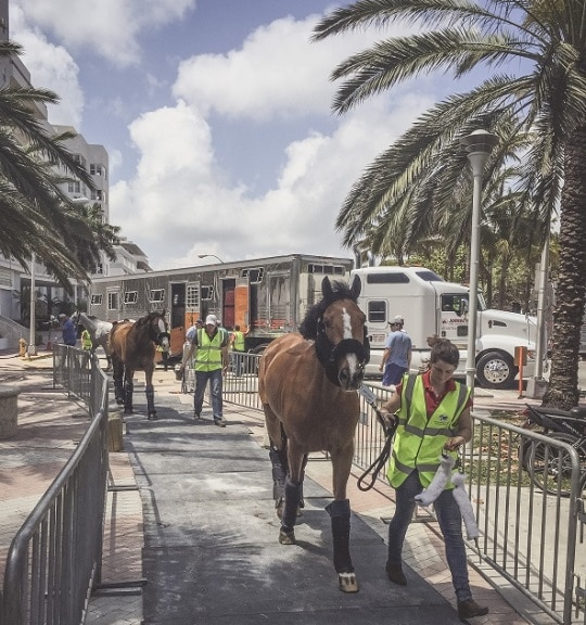 Equine Athletes Travel in Style to Miami