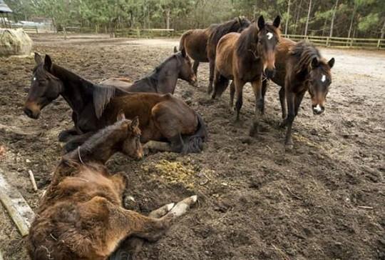 NC Launches Animal Cruelty Hotline