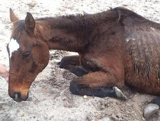 Warrant Issued for SC Farrier in Horse's Death