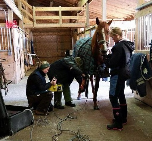 Pennsylvania Horse Rescue Operator Indicted for Extortion