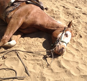 Reining Horse's Death Investigation Continues