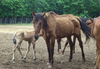 Former Horse Rescuer Forfeits Rights to Horses