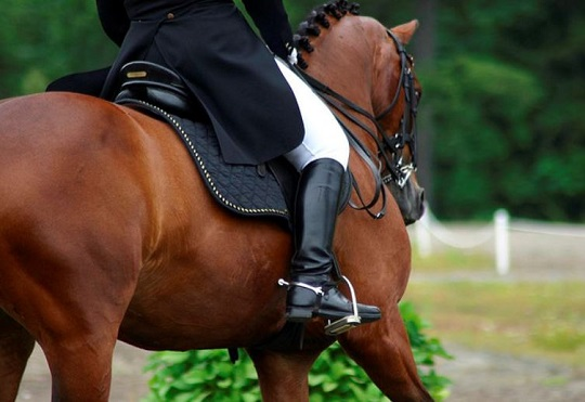 Properly engaging the horse's back can avoid painful back issues like Kissing Spine.