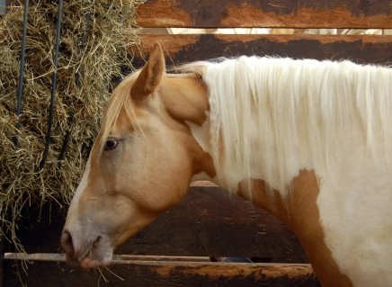 A New Jersey horse is positive with Equine Herpes Myeloencephalopathy (EHM) leading to quarantines in two counties.