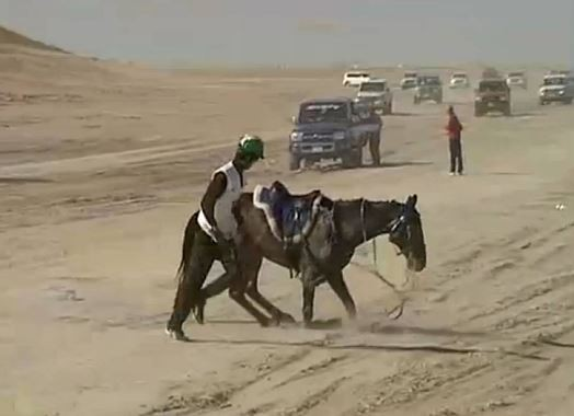 "FEI Suspends UAE Federation for ""Major Horse Welfare Issues"""