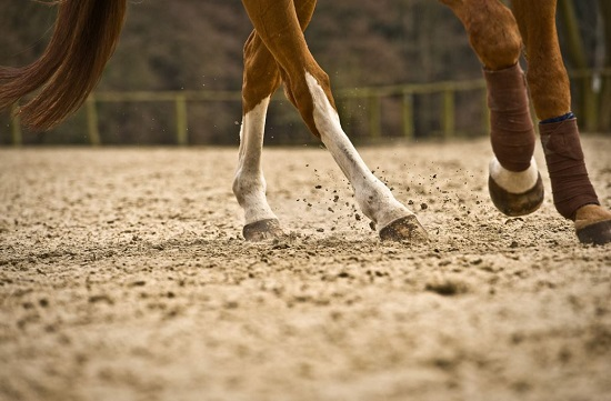 Equine Sales Contract Essentials
