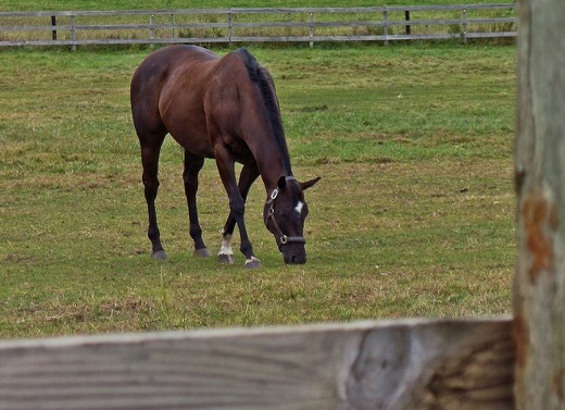 Researchers Land $2.1 Million to Study Equine Probiotic Wormer