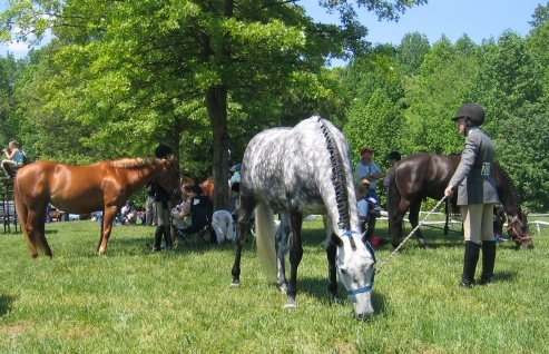 EHV-1 Bio-Security Measures for Horse Owners