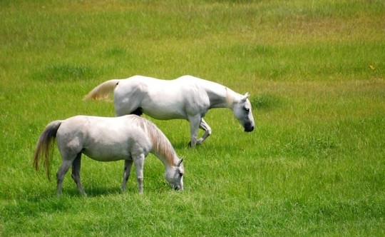 EHV-1 Virginia Update: Third Culpeper Horse Confirmed Positive