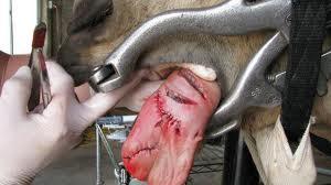 Judge Judy Horse Injury Case
