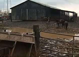 Kentucky Horse Trader Charged with Animal Cruelty