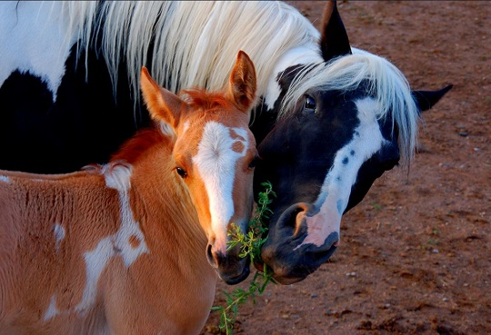Horses and #Hashtags for Equestrian Marketing