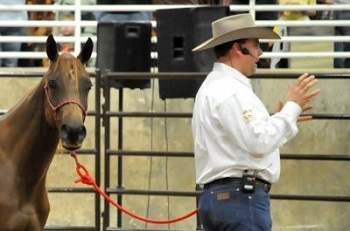 Shamus Haws Sentenced in Animal Cruelty Case for Horses' Deaths