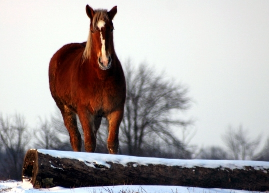Neurologic EHV-1 Confirmed in New Jersey Horse