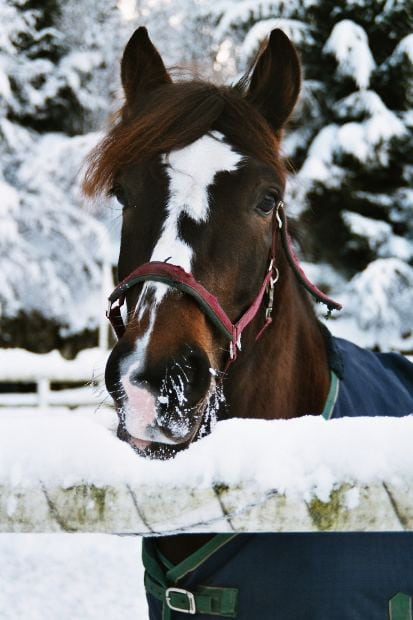 Tips to Prevent Winter Colic