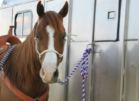 Equine Interstate Event Permit Gives Horse Owners 6 Month Traveling Power