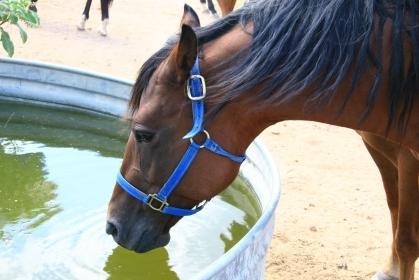 Vermont Horse Dies from Eastern Equine Encephalitis
