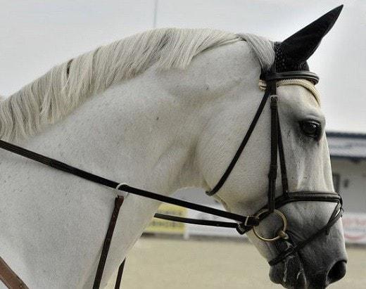 horse insurance killings