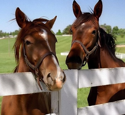 Equine Appraiser Directory