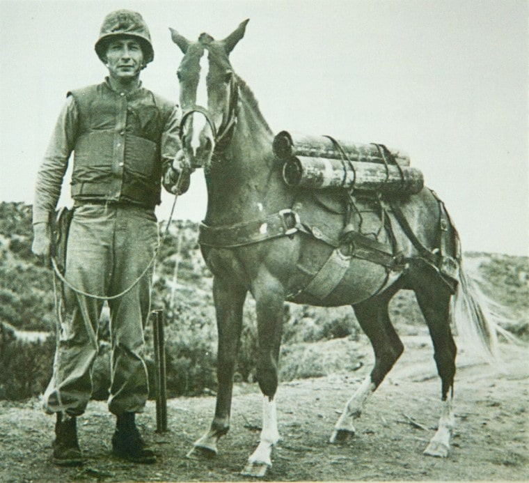 Sgt Reckless is the little horse that was a war hero.