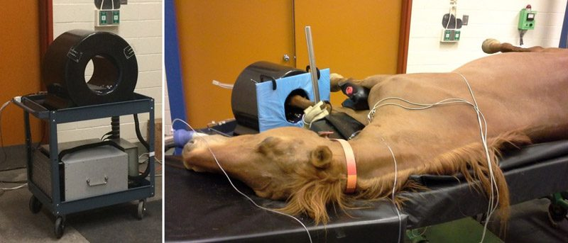 PET imaging for equines