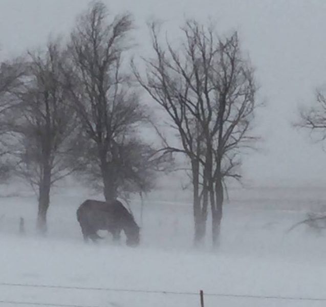 South Dakota officials have postponed the auction of up to 650 mustangs. It is the latest turn after mustang sanctuary operator Karen Sussman allegedly starved her horses prior to the authorities involvement.