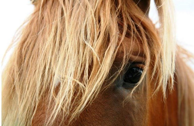 Horses May Assist Dementia Patients: Study