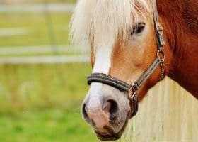 17 Horses Euthanized Due to Contaminated Horse Feed: DOJ Suit