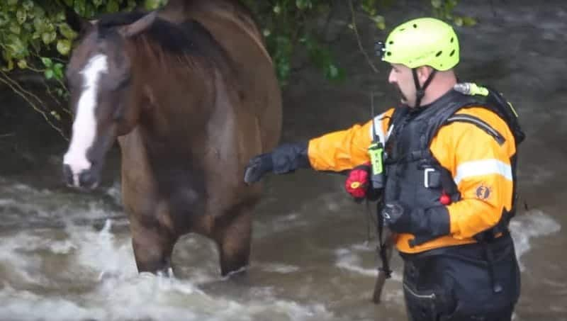 Harvey Flood Horses Headed to Auction
