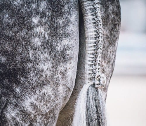 unlimited featured horse classified listings of horses for sale - add yours today