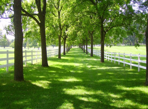 Horse property for sale or rent listings