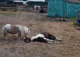 pony death and inaction at equine sanctuary leads to investigation and 62 animal cruelty charges against Sarah Rabinowitz. She owns Labrador Hill Equine Sanctuary in NJ