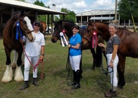 Horse & Rider: Go from Ordinary to Extraordinary