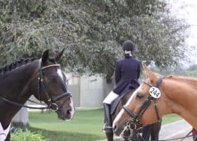 How Mental Resilience Enhances Horse Riding Success