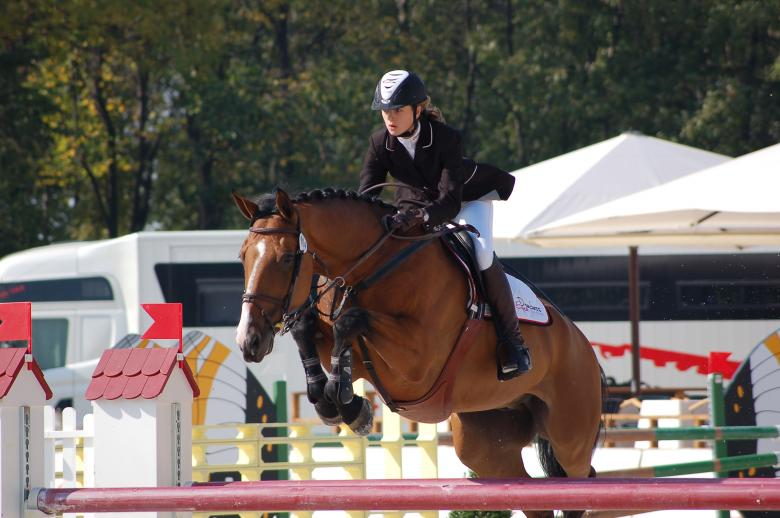 What do you need to know about equine appraisers?