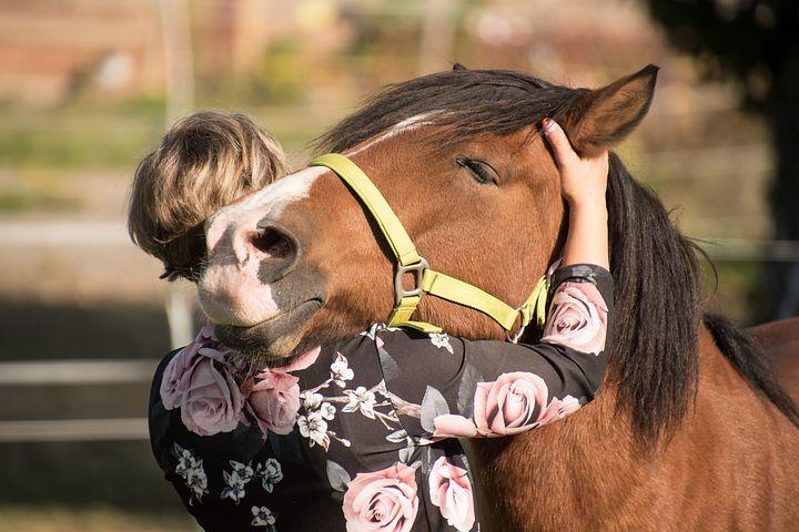 Horse Market Directory Concierge Listing