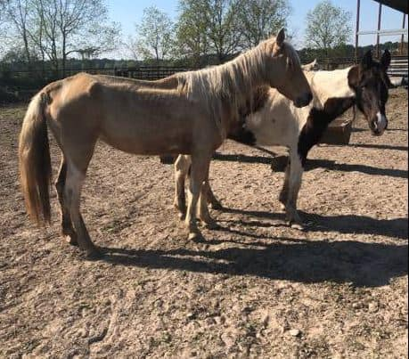 seized horses from thompson horse lot